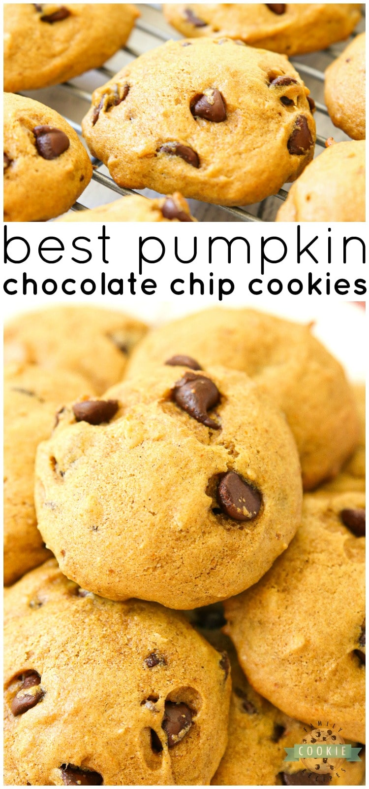 Delicious Pumpkin Chocolate Chip Cookies are incredible pillows of soft and chewy cookie goodness! Pillowy soft chocolate chip cookies straight from the oven are made even better with the addition of pumpkin. via @buttergirls